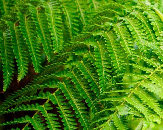 茂宜岛的绿色_图1-3