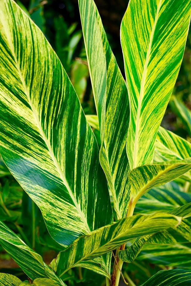 茂宜岛的绿色_图1-6