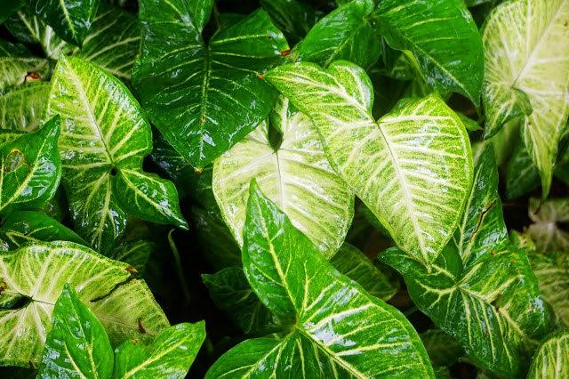 茂宜岛的绿色_图1-8