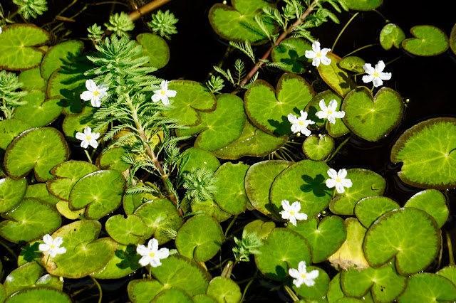 茂宜岛的绿色_图1-9