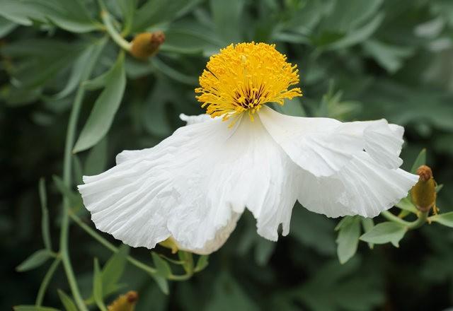 6月的维多利亚小花园_图1-1
