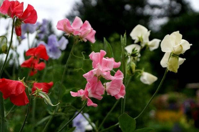 6月的维多利亚小花园_图1-4