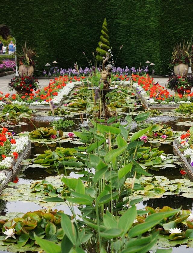 6月的维多利亚小花园_图1-9
