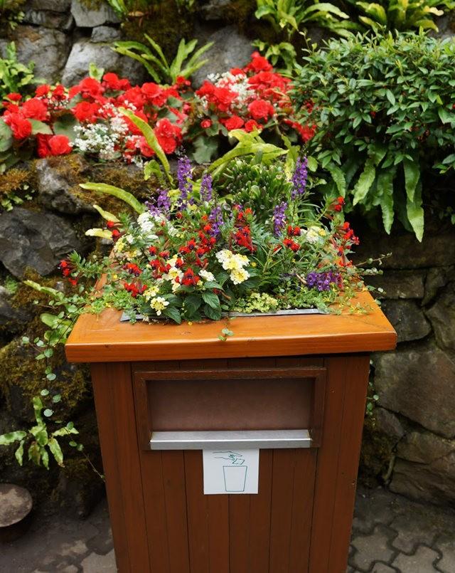 6月的维多利亚小花园_图1-12