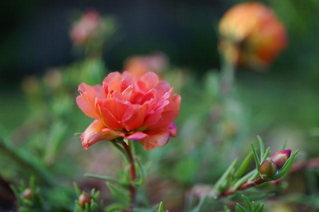 6月的维多利亚小花园_图1-14