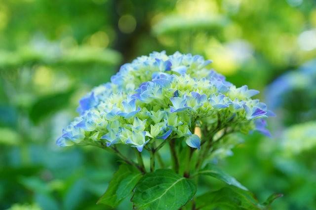 6月的维多利亚小花园_图1-21