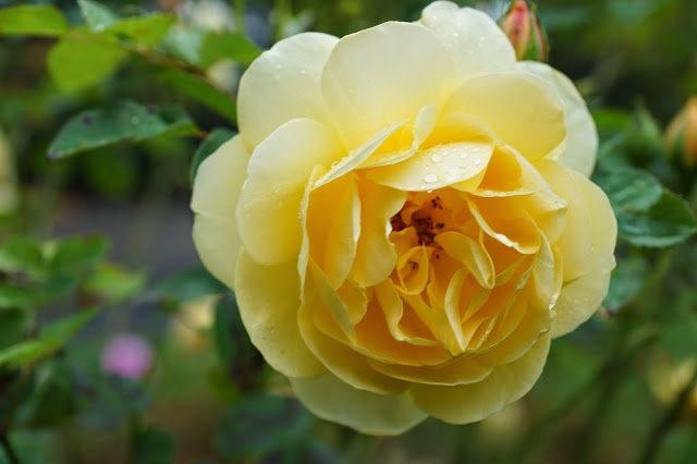 6月的维多利亚小花园_图1-24