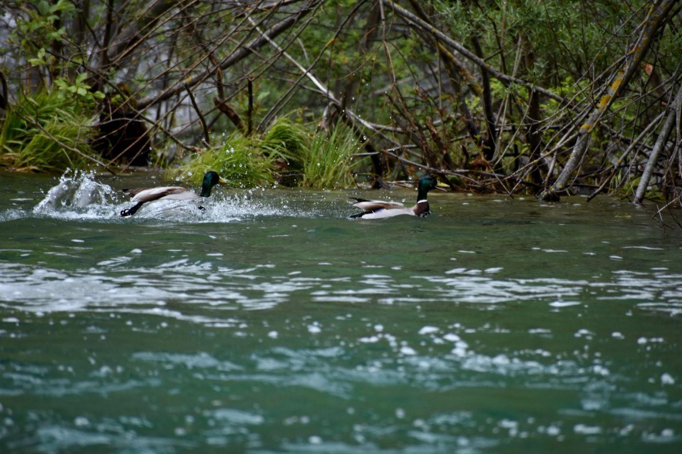 克罗地亚十六湖国家公园_图1-17