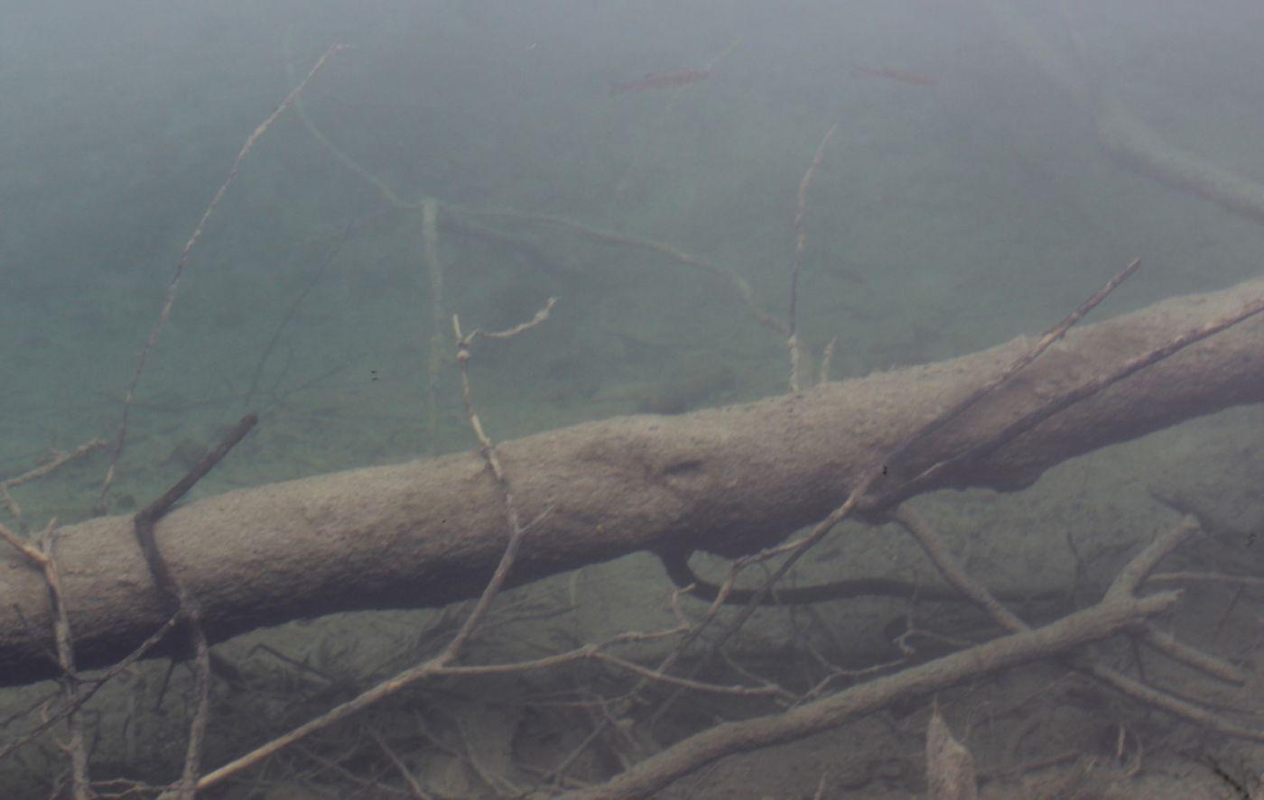 克罗地亚十六湖国家公园_图1-28