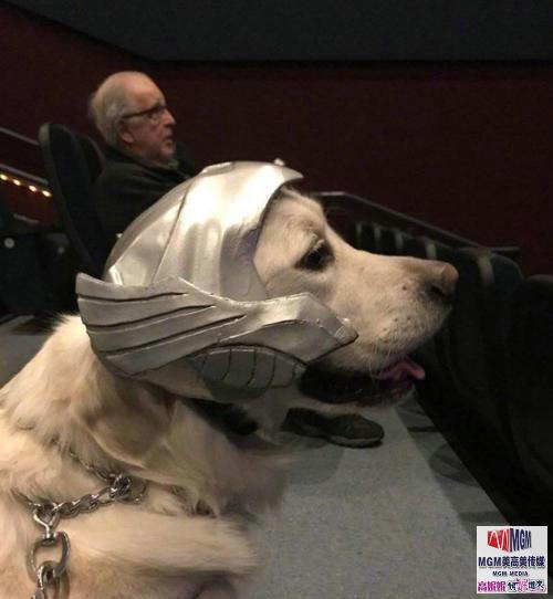 高娓娓:美国土豪带狗看电影遭拒,一怒之下自己开一家狗狗电影院 ..._图1-1