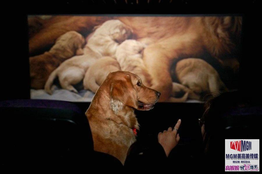 高娓娓:美国土豪带狗看电影遭拒,一怒之下自己开一家狗狗电影院 ..._图1-3