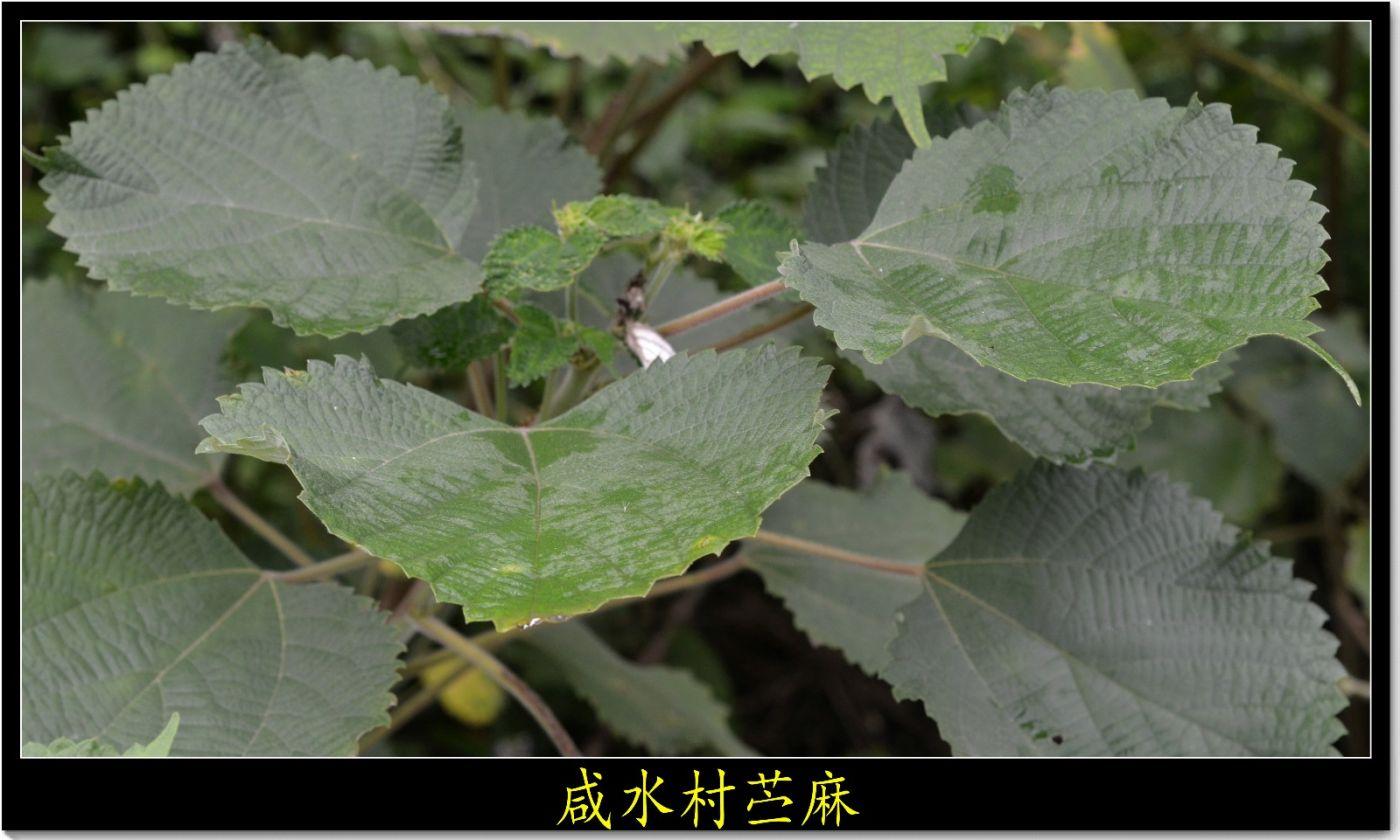 五月芒种(五律三首)_图1-5