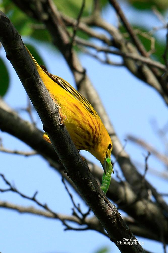 小黄莺和绿色小精灵_图1-11