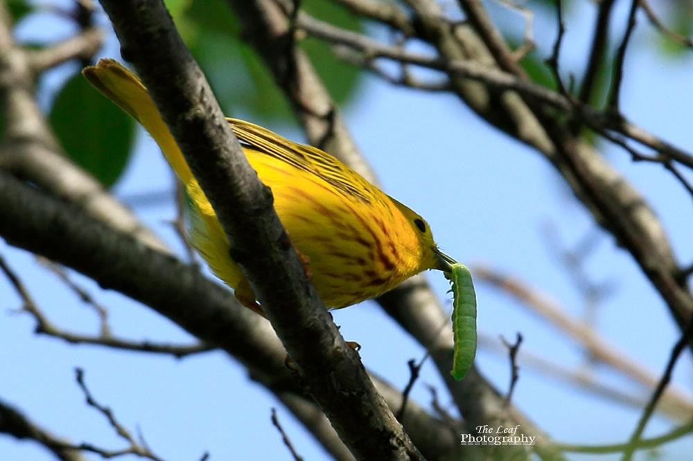 小黄莺和绿色小精灵_图1-2