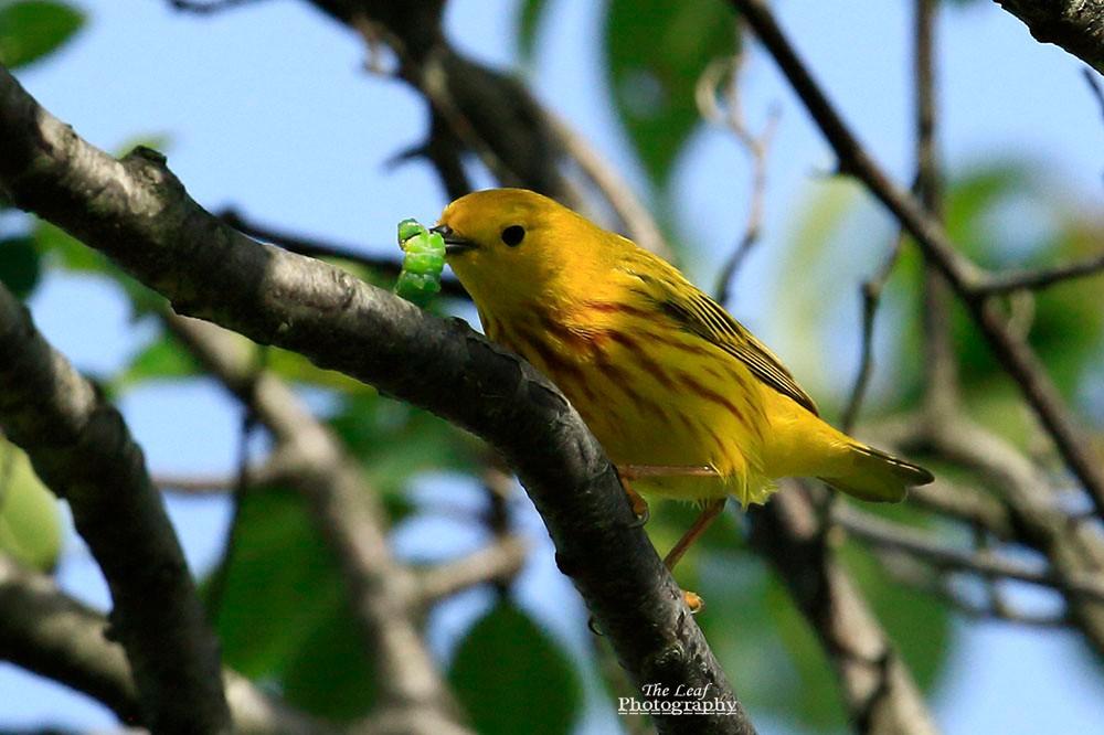 小黄莺和绿色小精灵_图1-1