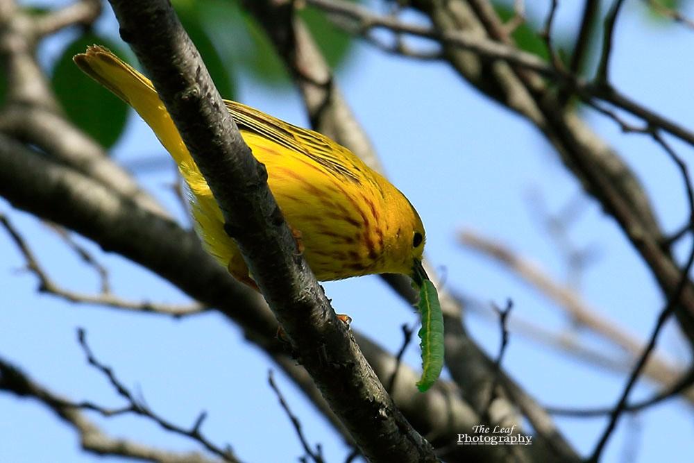 小黄莺和绿色小精灵_图1-3