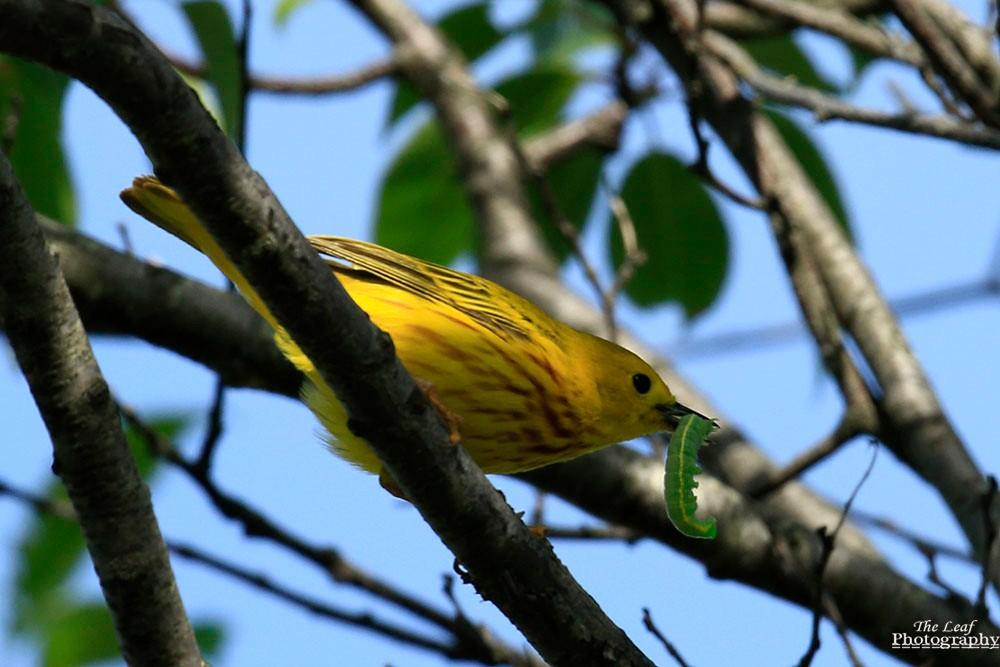 小黄莺和绿色小精灵_图1-4