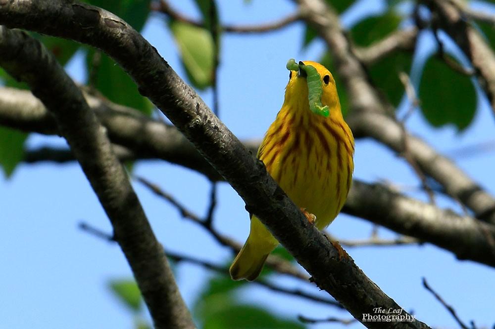 小黄莺和绿色小精灵_图1-5