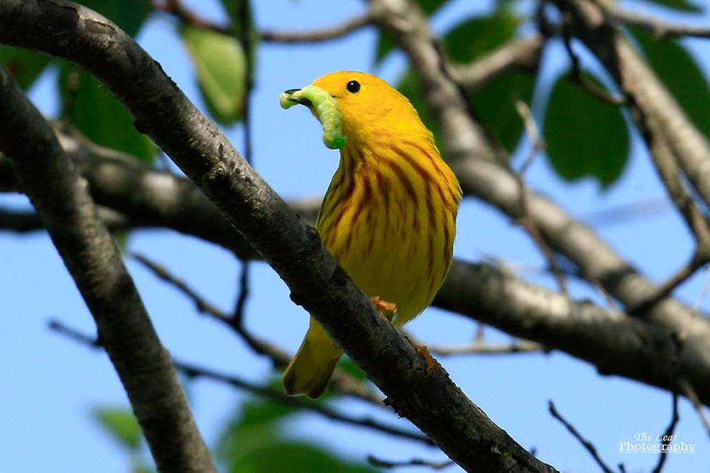 小黄莺和绿色小精灵_图1-8