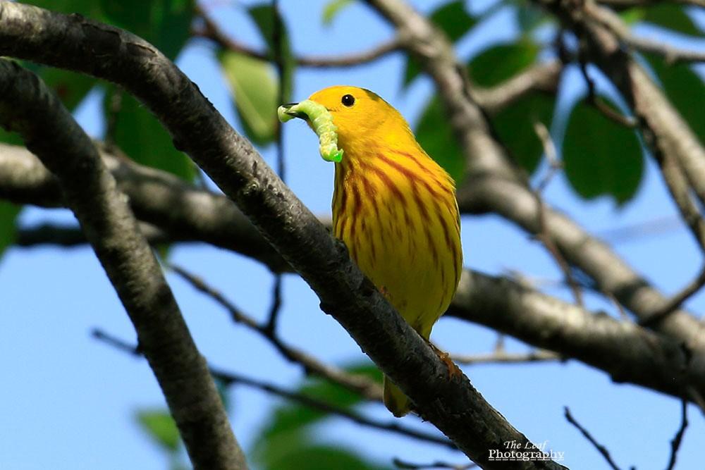 小黄莺和绿色小精灵_图1-7