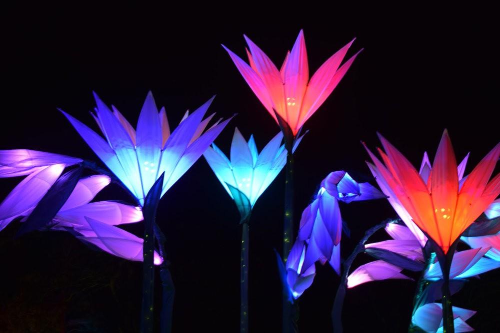 威斯利花园12月的晚上----精美与细致的典范_图1-19