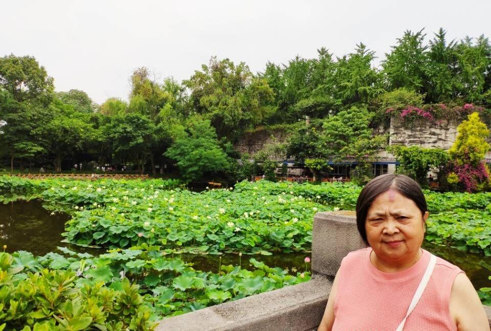 成都文化公园看荷花,百花坛公园呼吸新鲜空气!_图1-11