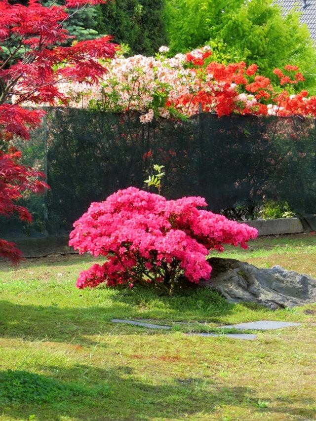 杜鹃花园_图1-24