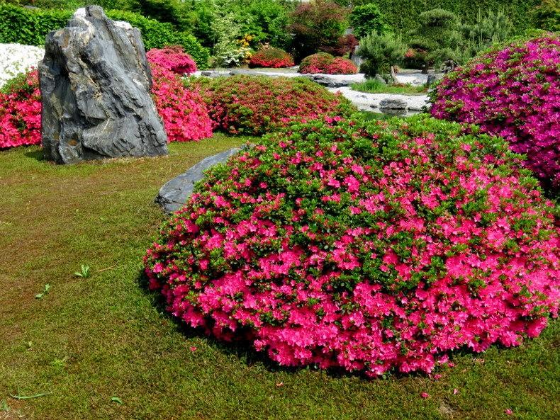 杜鹃花园_图1-26
