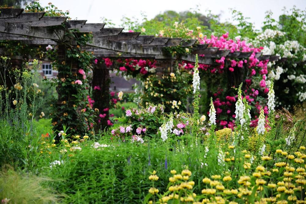 皇家植物园玫瑰丰盈_图1-2