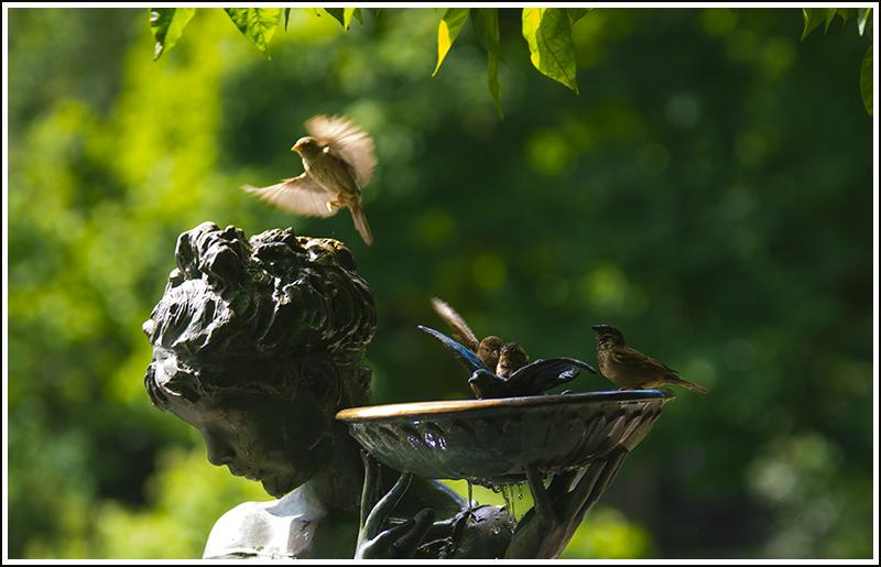 【龍的传人拍攝】小小鸟_图1-24