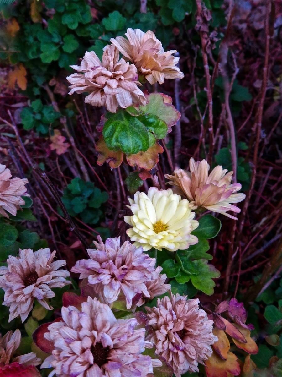 【晓鸣摄影】花卉植物49作展+独创简诗对照谱_图1-22