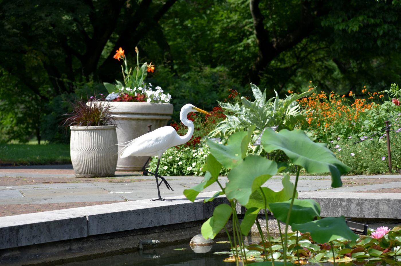 白鹭来花园赏花_图1-3