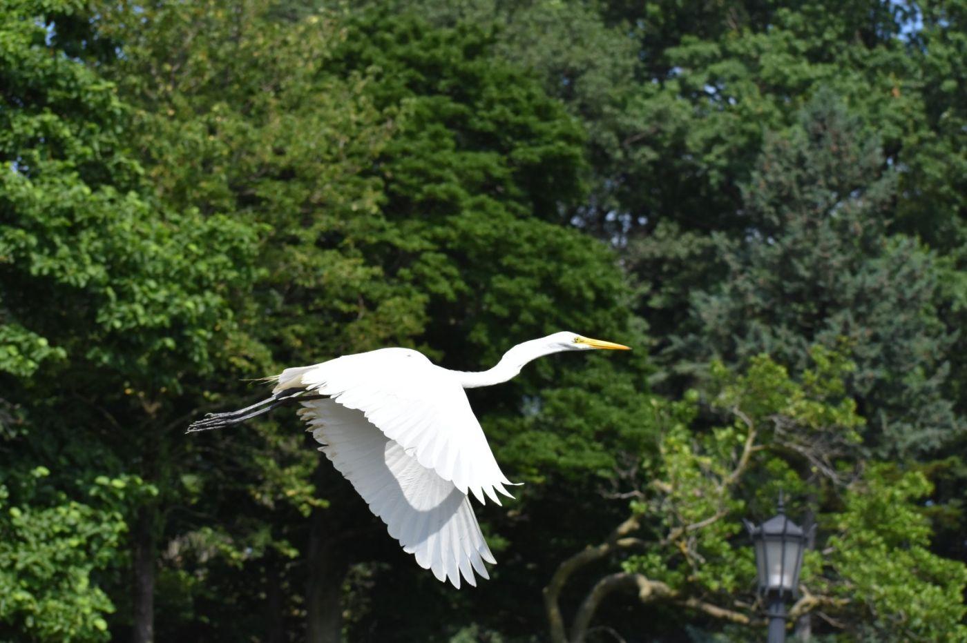 白鹭来花园赏花_图1-28