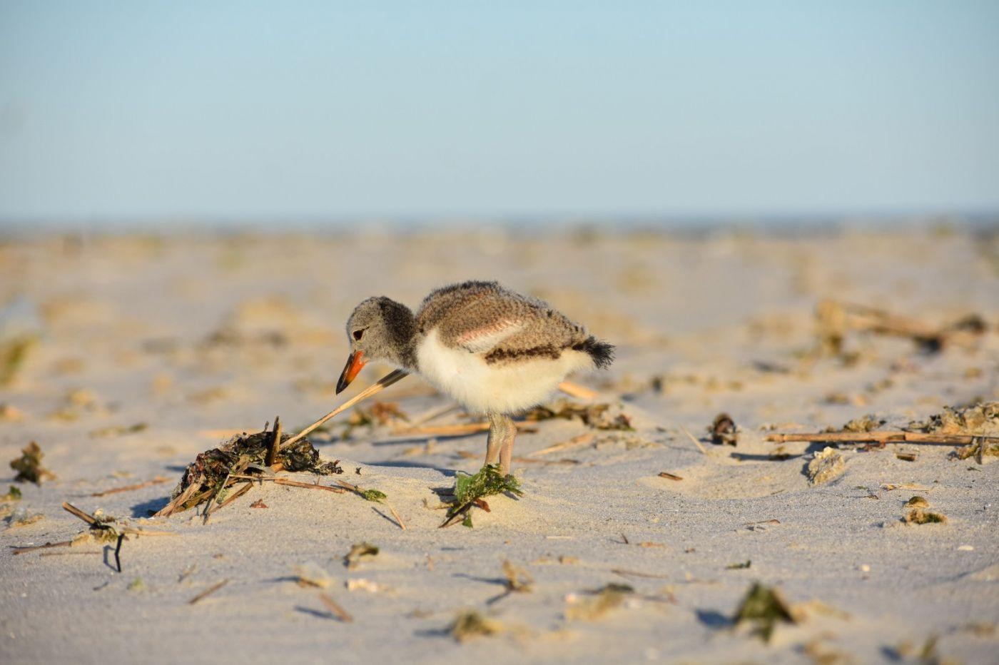 谁家的孩子在海滩游荡_图1-8