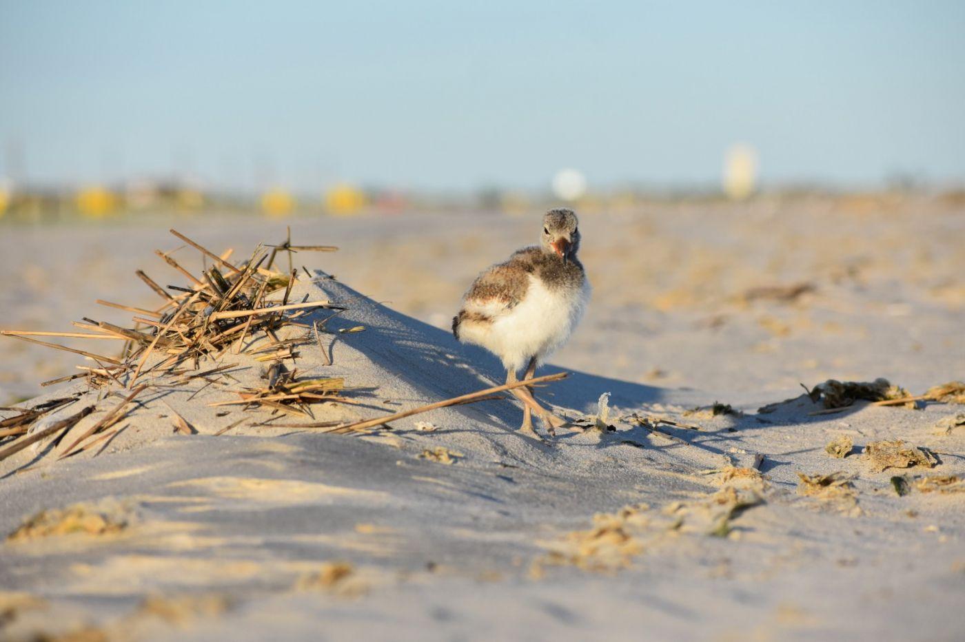 谁家的孩子在海滩游荡_图1-9