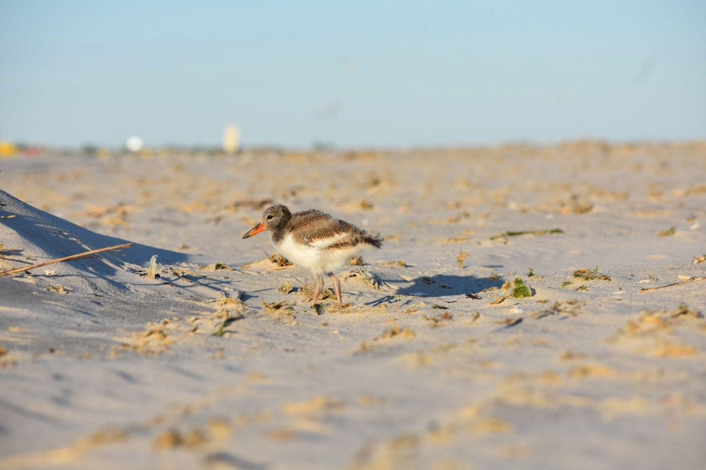 谁家的孩子在海滩游荡_图1-12