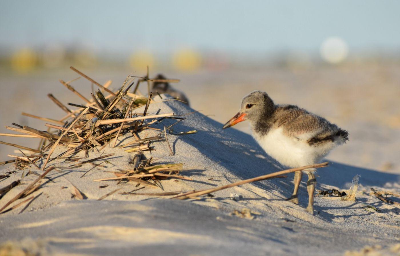 谁家的孩子在海滩游荡_图1-13