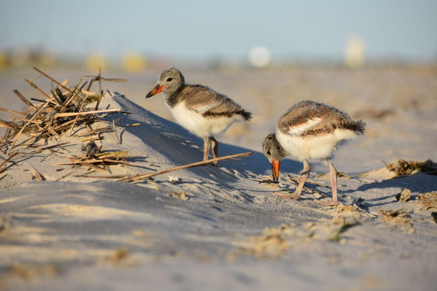 谁家的孩子在海滩游荡_图1-18