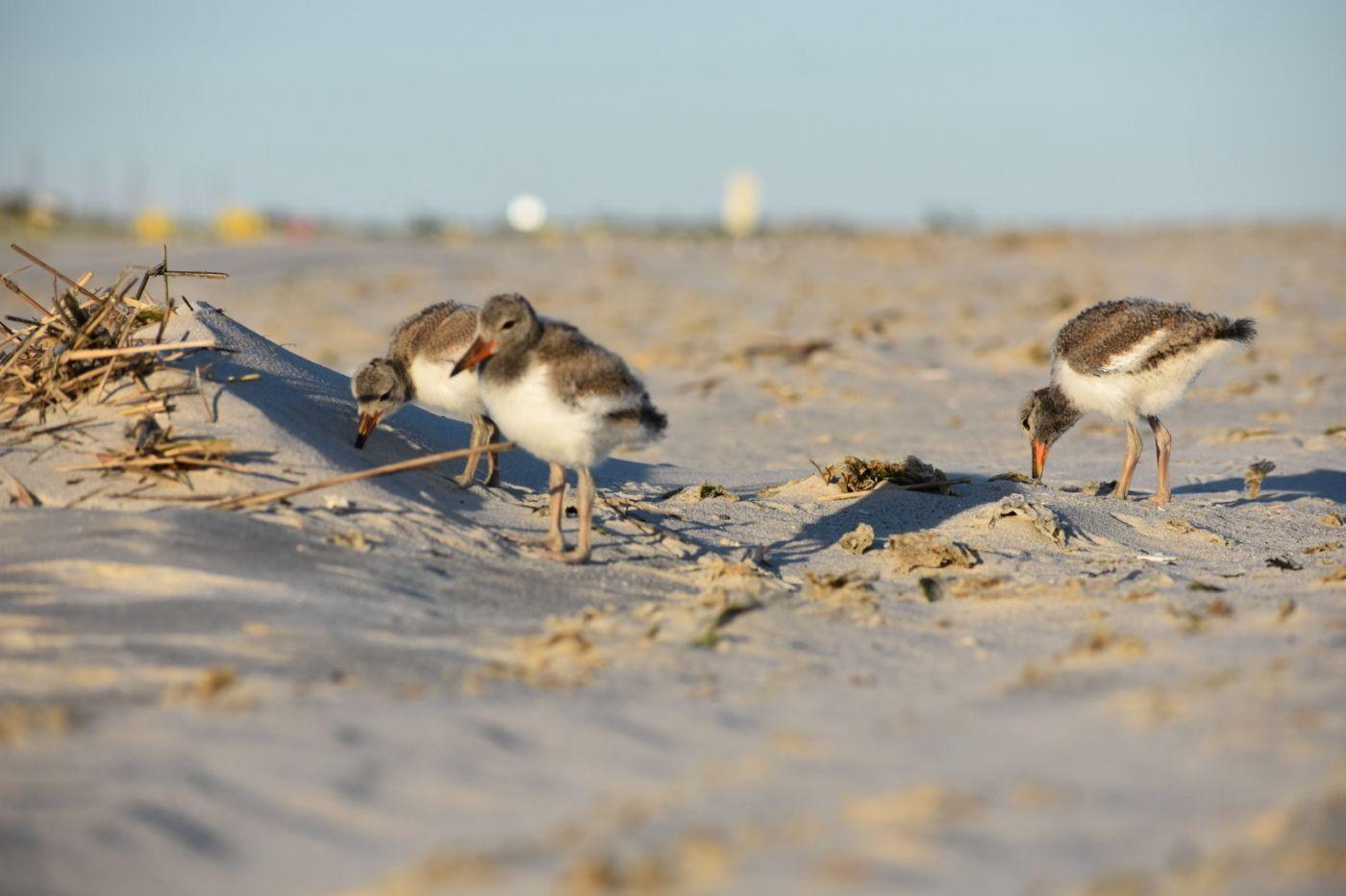 谁家的孩子在海滩游荡_图1-23