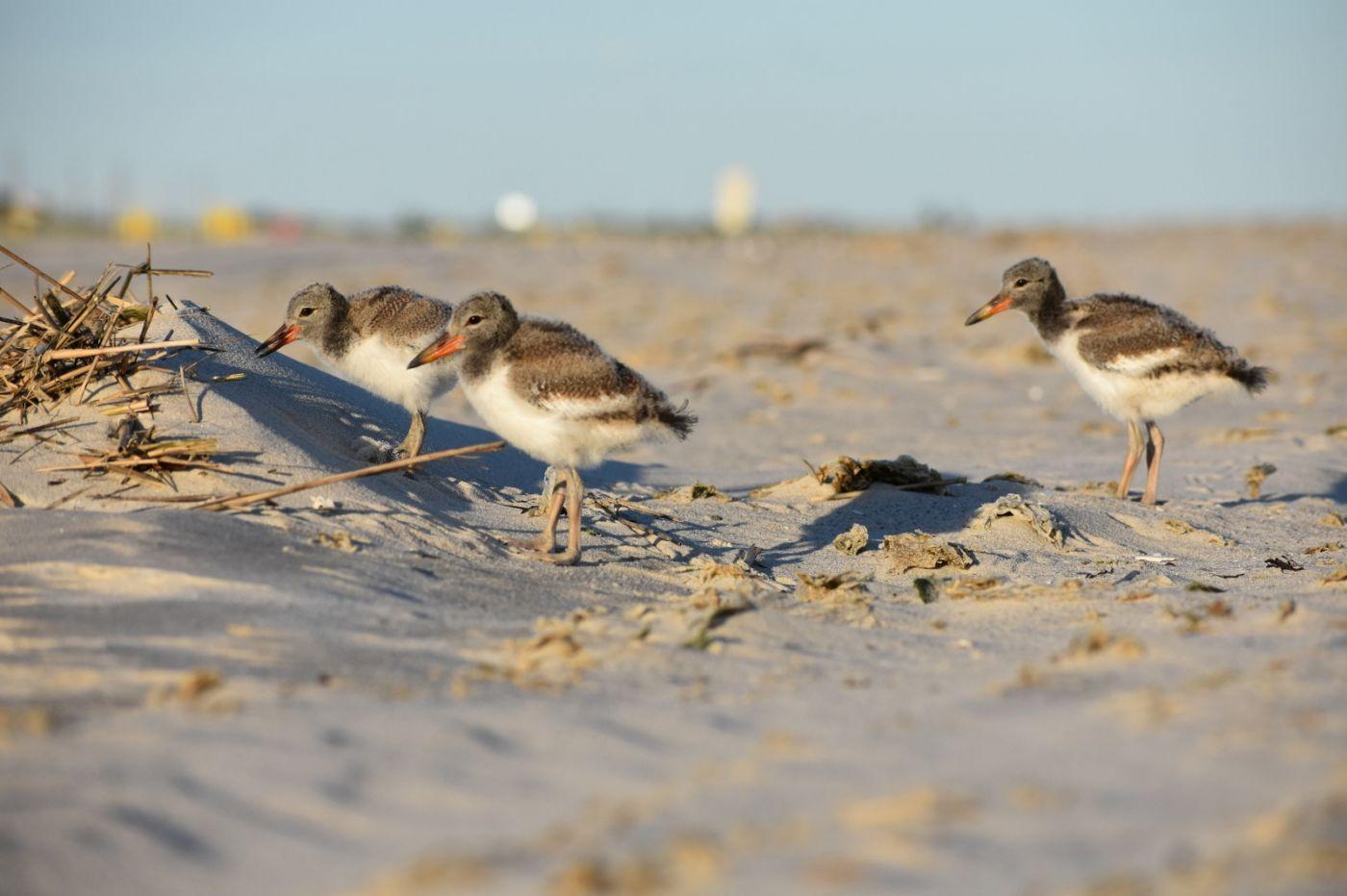 谁家的孩子在海滩游荡_图1-24