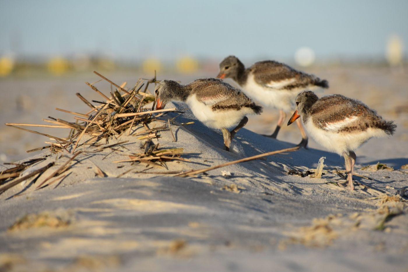 谁家的孩子在海滩游荡_图1-25