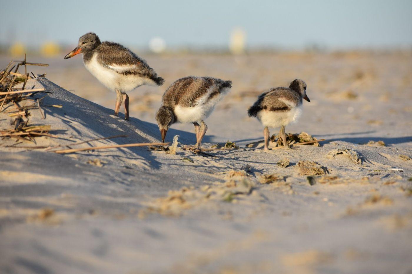 谁家的孩子在海滩游荡_图1-26