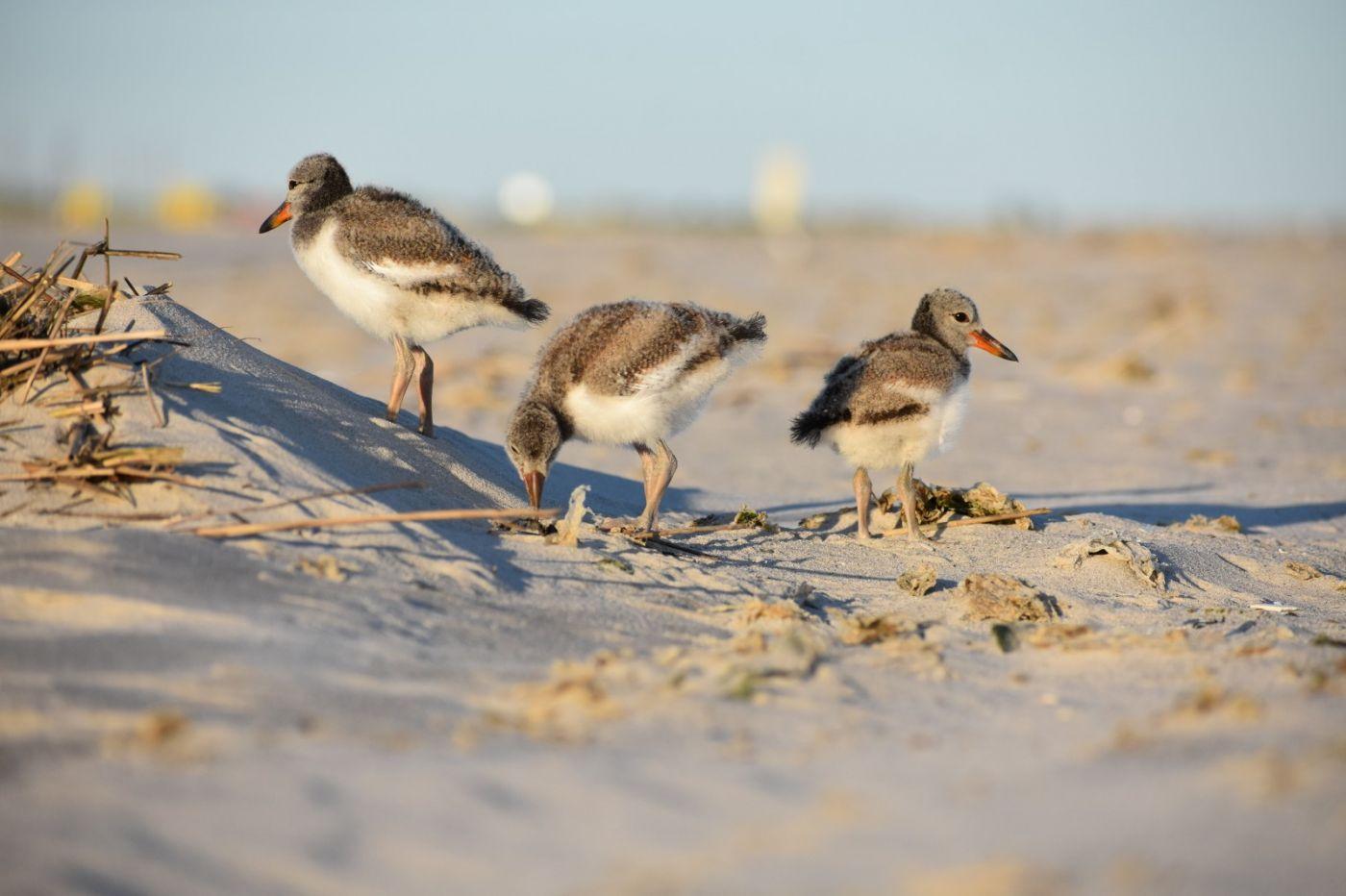 谁家的孩子在海滩游荡_图1-27