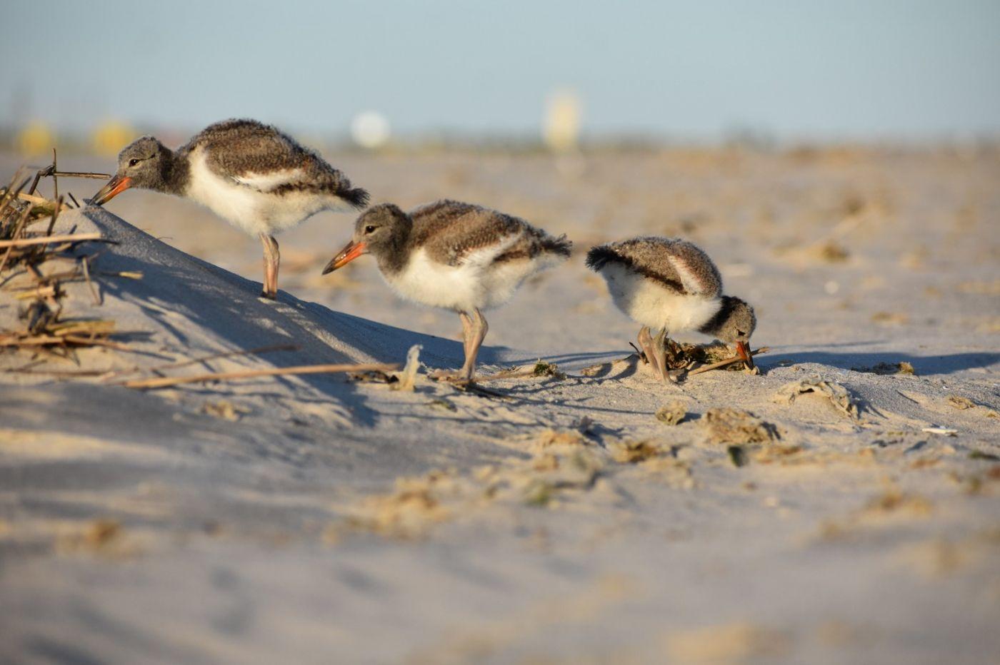 谁家的孩子在海滩游荡_图1-28