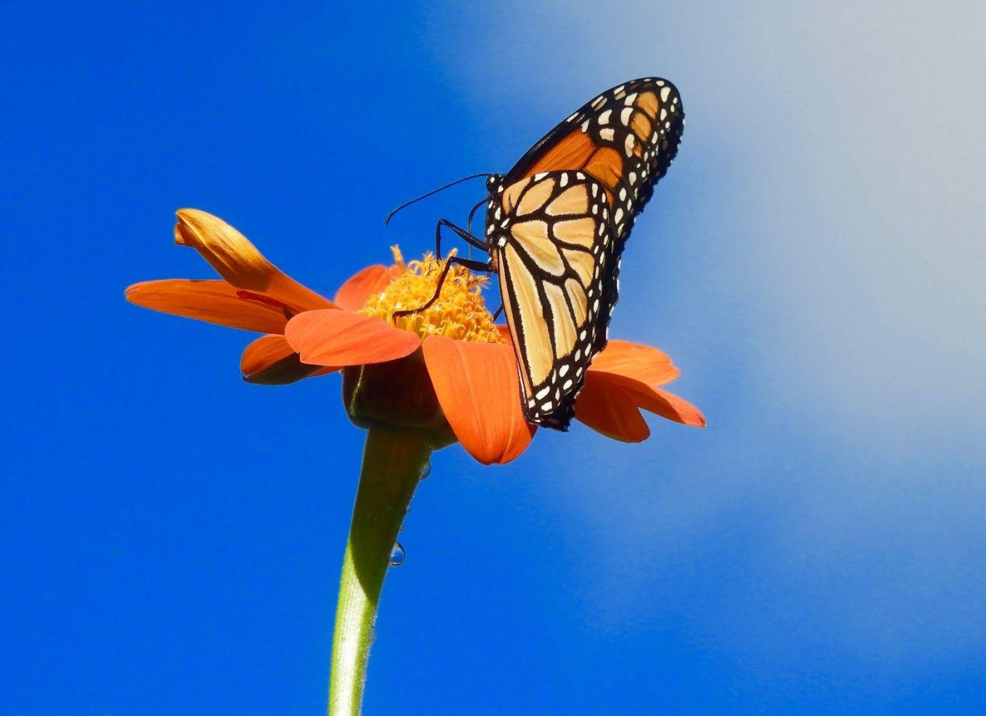 赫尔希花园看蝴蝶_图1-1
