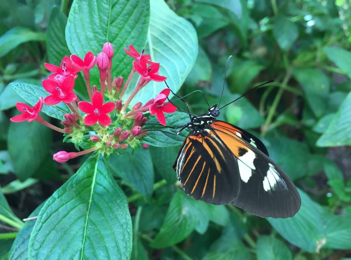 赫尔希花园看蝴蝶_图1-5