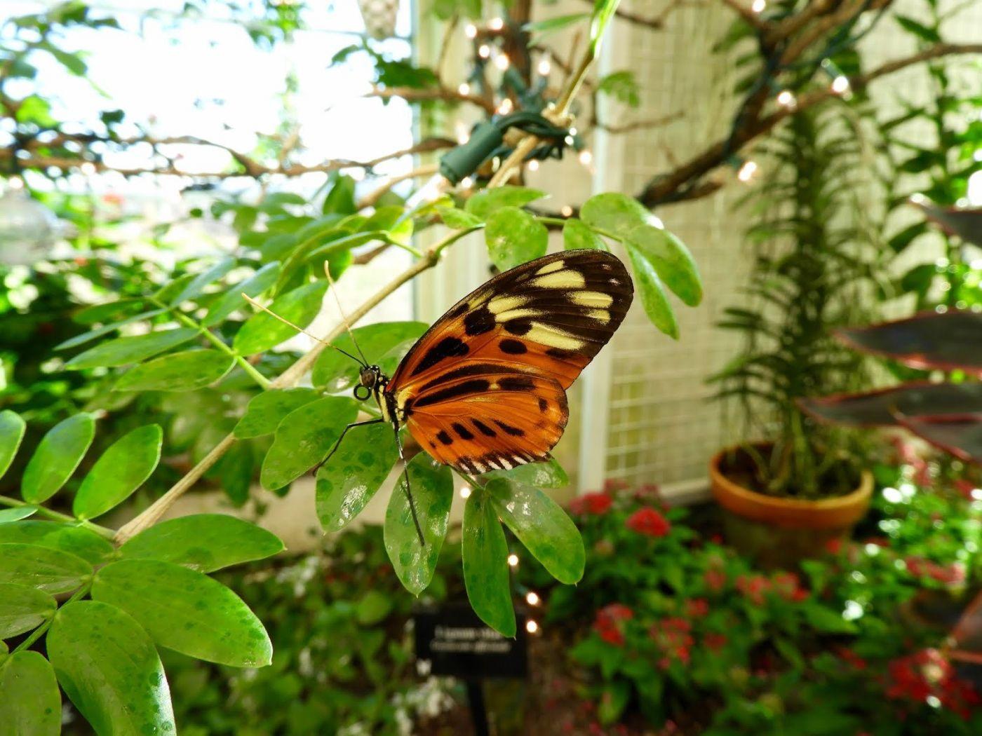 赫尔希花园看蝴蝶_图1-6