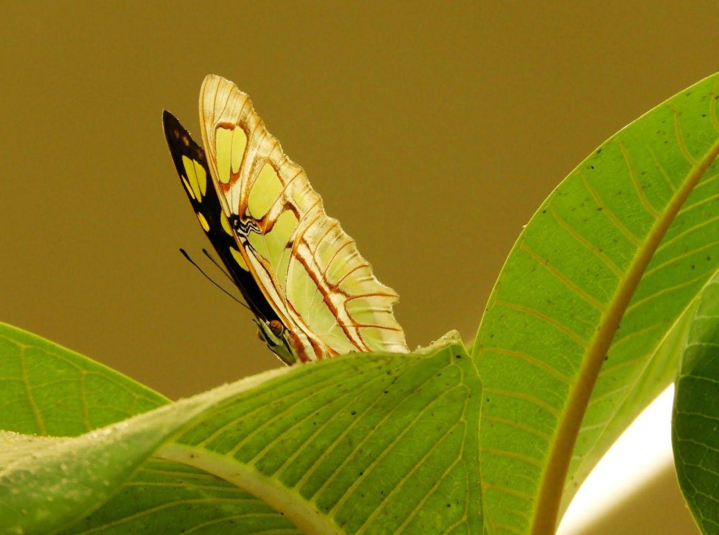 赫尔希花园看蝴蝶_图1-8