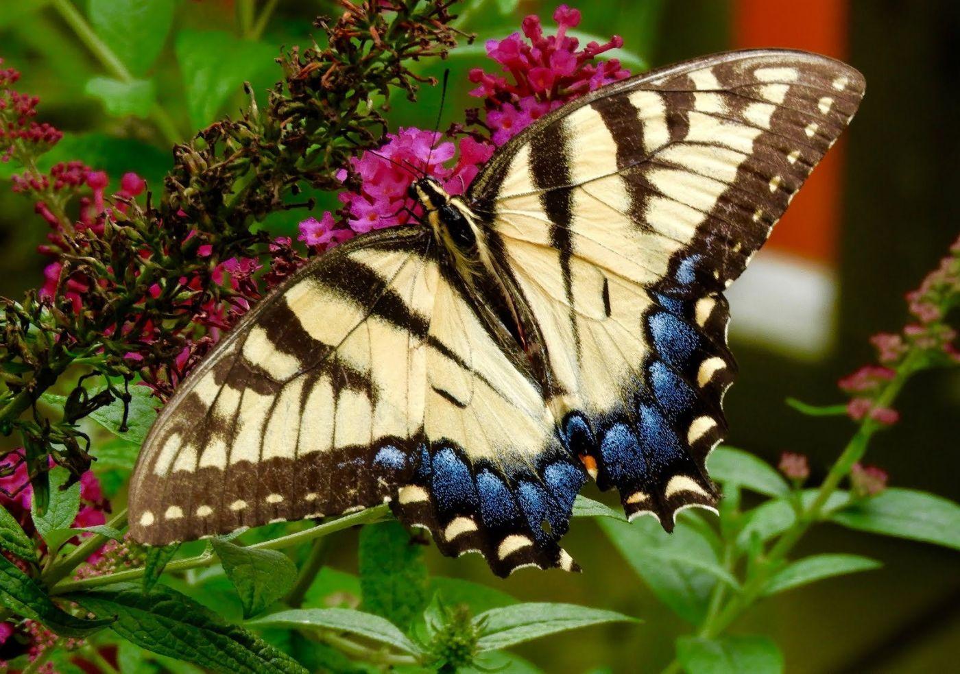 赫尔希花园看蝴蝶_图1-17