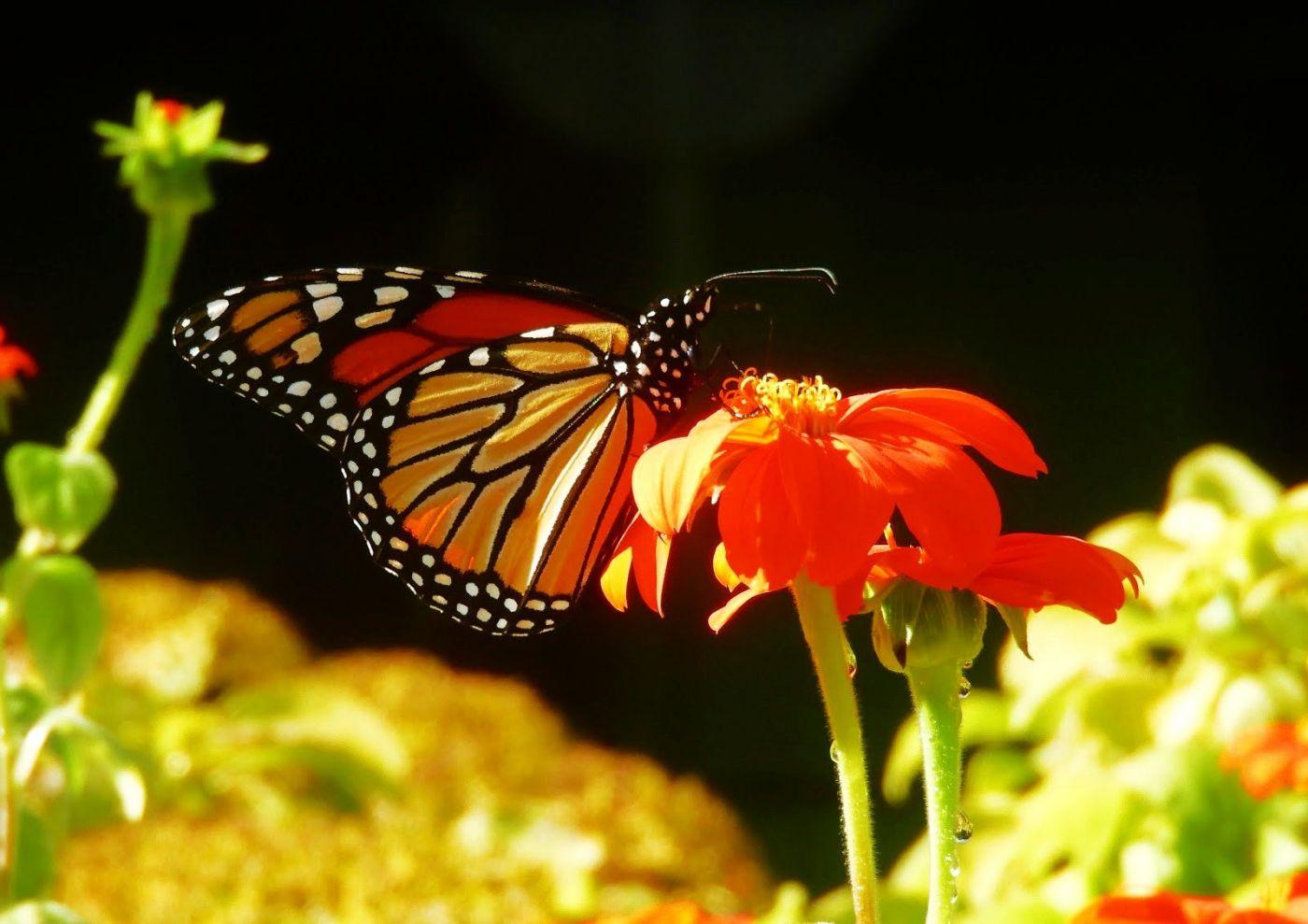 赫尔希花园看蝴蝶_图1-19